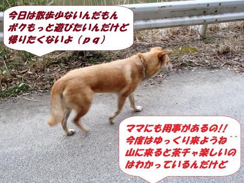 P3111071_convert_20140312083317.jpg