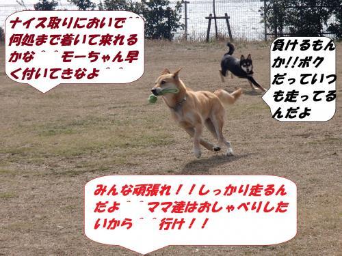 P3121073_convert_20140313081222.jpg