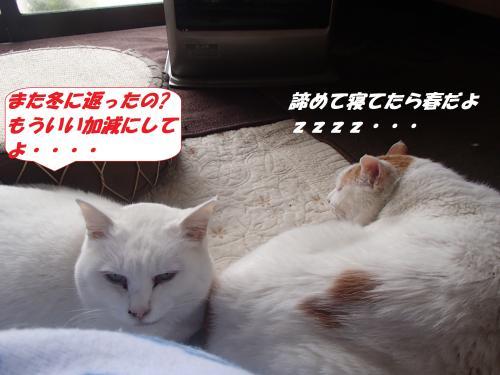 P3131080_convert_20140314073159.jpg