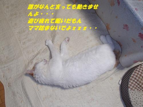 P3221192_convert_20140323082205.jpg