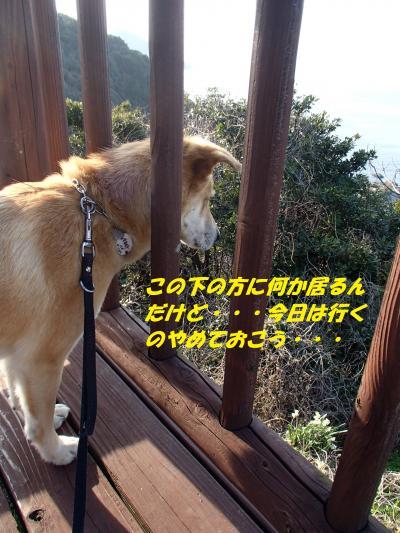 P3280079_convert_20140329074720.jpg