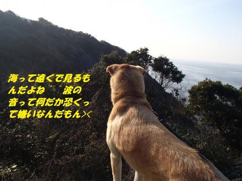 P3280080_convert_20140329075116.jpg