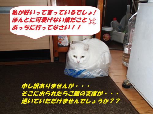P3290099_convert_20140330104434.jpg