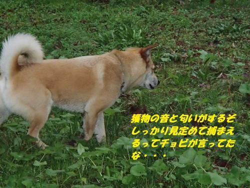 P3300102_convert_20140331091936.jpg