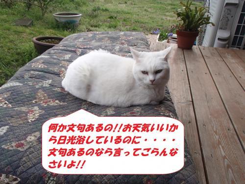 P3310108_convert_20140401100512.jpg