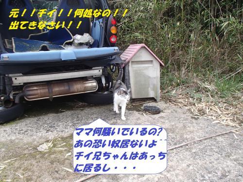 P3310109_convert_20140401100531.jpg
