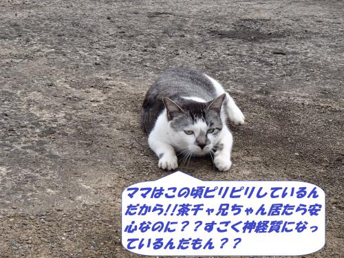 P3310111_convert_20140401100656.jpg