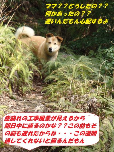 P3310119_convert_20140402092938.jpg