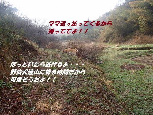 P4010137_convert_20140401100843.jpg