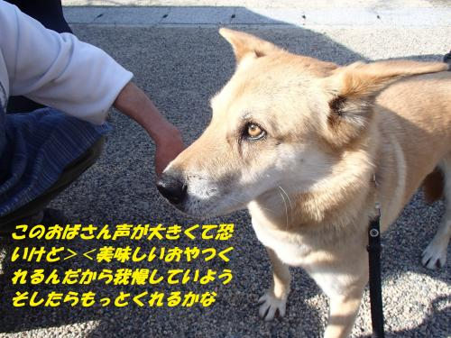 P4010140_convert_20140403092131.jpg