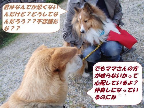 P4010155_convert_20140403092332.jpg