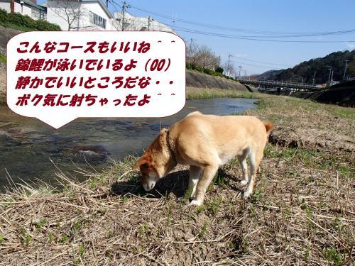 P4020158_convert_20140404083402.jpg