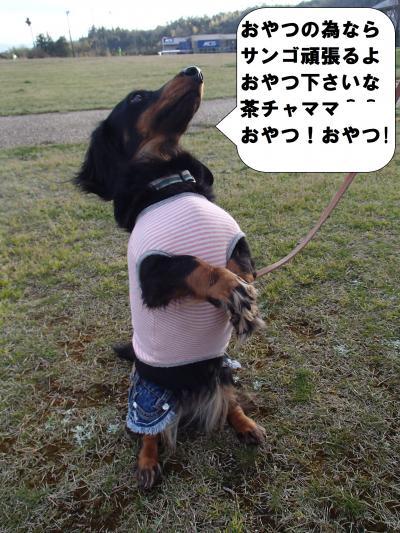 P4060238_convert_20140407103522.jpg