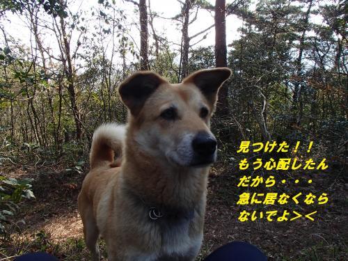 P4080257_convert_20140410090038.jpg