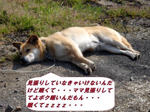 P4090259_convert_20140411093131.jpg