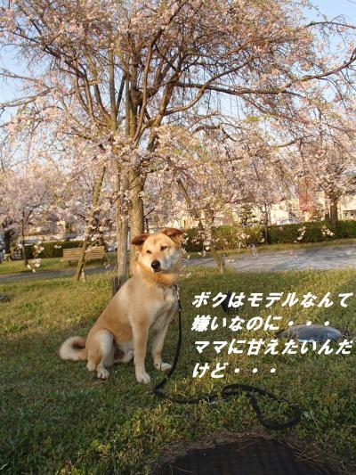 P4090266_convert_20140411092857.jpg