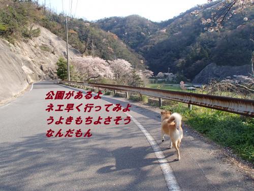 P4110298_convert_20140413102016.jpg