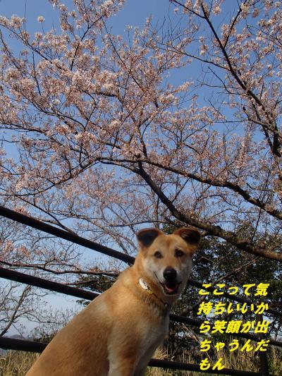 P4110313_convert_20140413101924.jpg