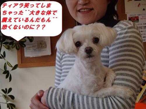 P4110334_convert_20140413102309.jpg