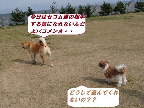 P4120339_convert_20140414101642.jpg
