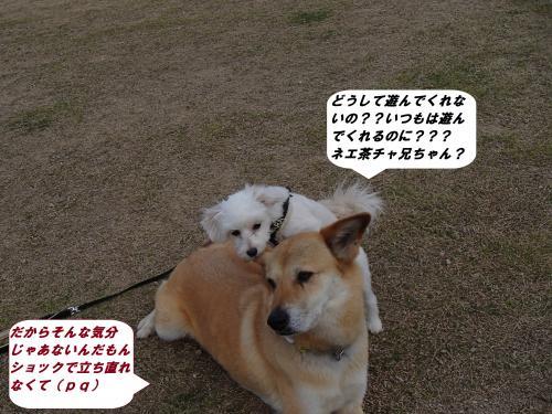 P4120349_convert_20140414102146.jpg