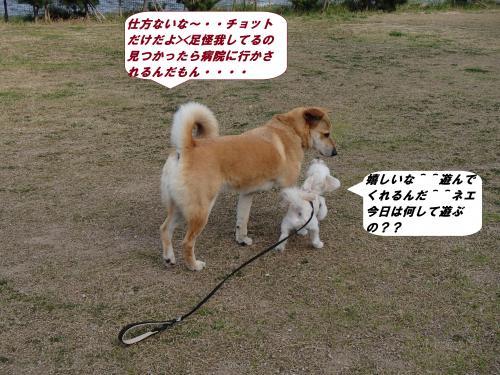 P4120352_convert_20140414102206.jpg