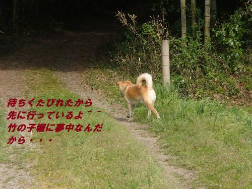 P4170467_convert_20140418094522.jpg