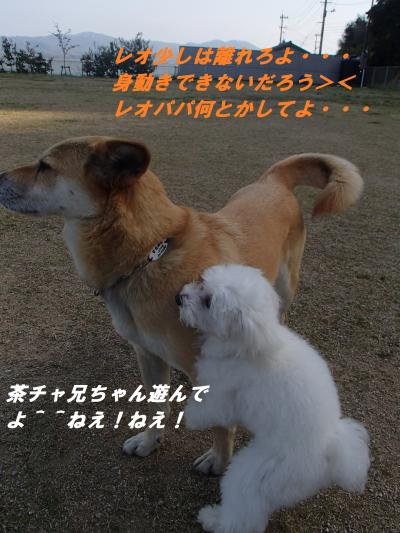 P4200540_convert_20140423091757.jpg