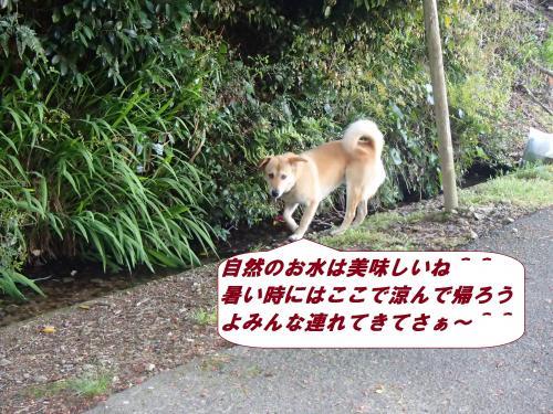 P4230567_convert_20140426094821.jpg