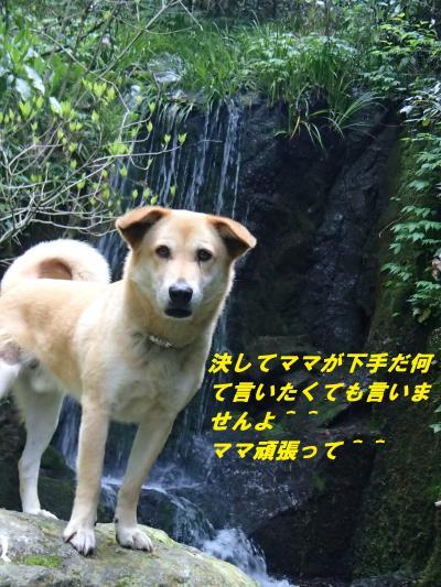 P4230576_convert_20140426094619.jpg