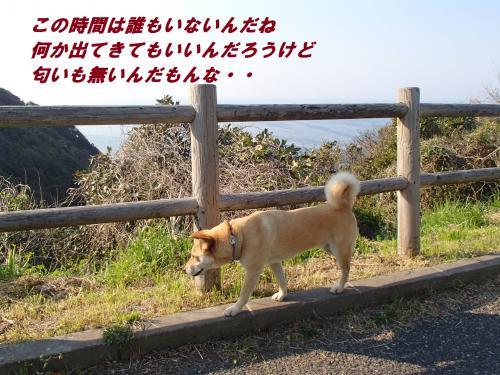 P4230600_convert_20140427101057.jpg