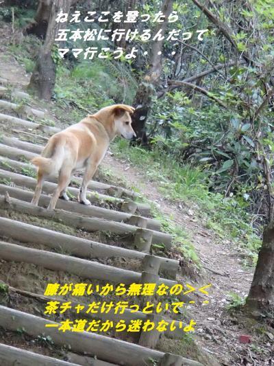 P4230610_convert_20140427100606.jpg