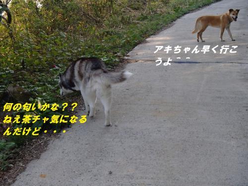 P4240640_convert_20140428101214.jpg