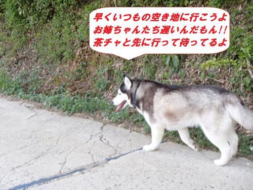 P4240642_convert_20140428101403.jpg