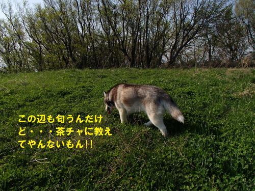 P4240665_convert_20140428101625.jpg