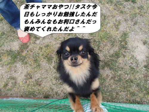 P4270715_convert_20140429102802.jpg