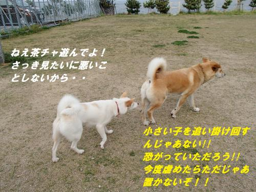 P4270722_convert_20140429102852.jpg