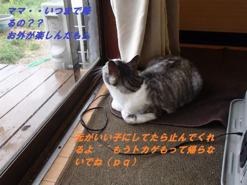 P4290731_convert_20140501085602.jpg