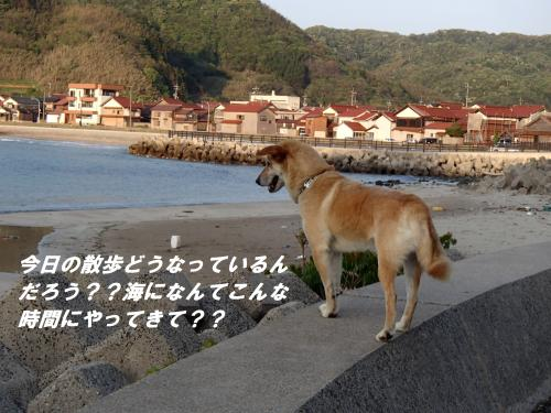 P5010766_convert_20140502095355.jpg
