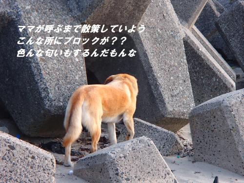 P5010776_convert_20140502095614.jpg