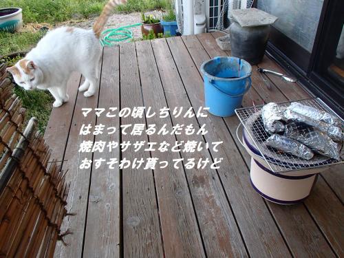 P5030792_convert_20140507092158.jpg