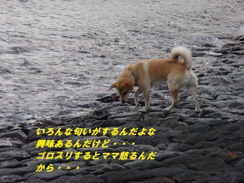 P5050836_convert_20140509095109.jpg