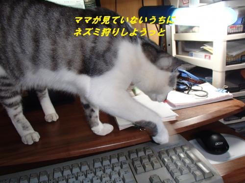 P5070861_convert_20140510093623.jpg