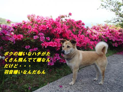 P5090875_convert_20140511100312.jpg