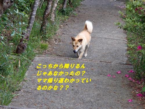 P5090880_convert_20140511100352.jpg