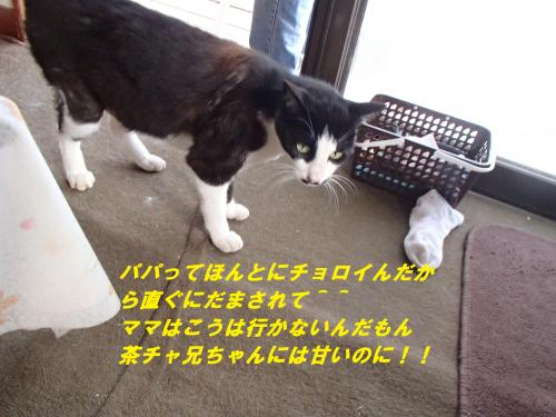 P6151088_convert_20140619084149.jpg