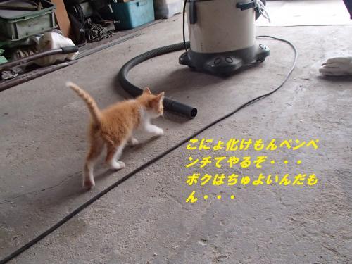 P6171111_convert_20140621092100.jpg