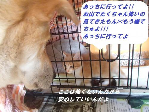 P6231166_convert_20140626091449.jpg
