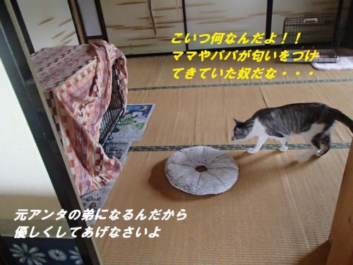 P6231168_convert_20140626091506.jpg