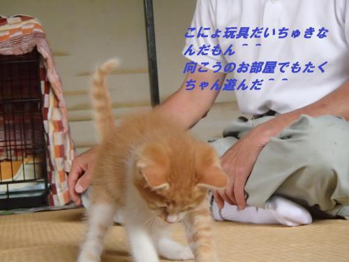 P6231178_convert_20140627085830.jpg